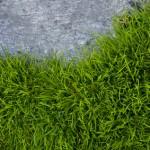 Immer wieder muss Rasen bei Rasenkantensteinen zurückgeschnitten werden.